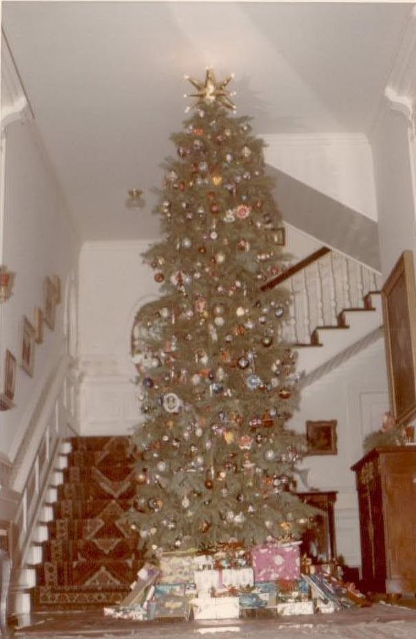 tree-hall
