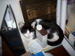 Our first musem cat, Beauregard Cogswell Norton III sleeping on Chris Roddy's desk, 2009.
